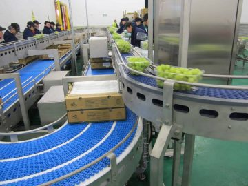 Conveyor system fruit and vegetables